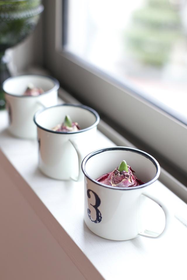 お気に入りのコップや空きビンを再利用!ヒヤシンスの水耕栽培