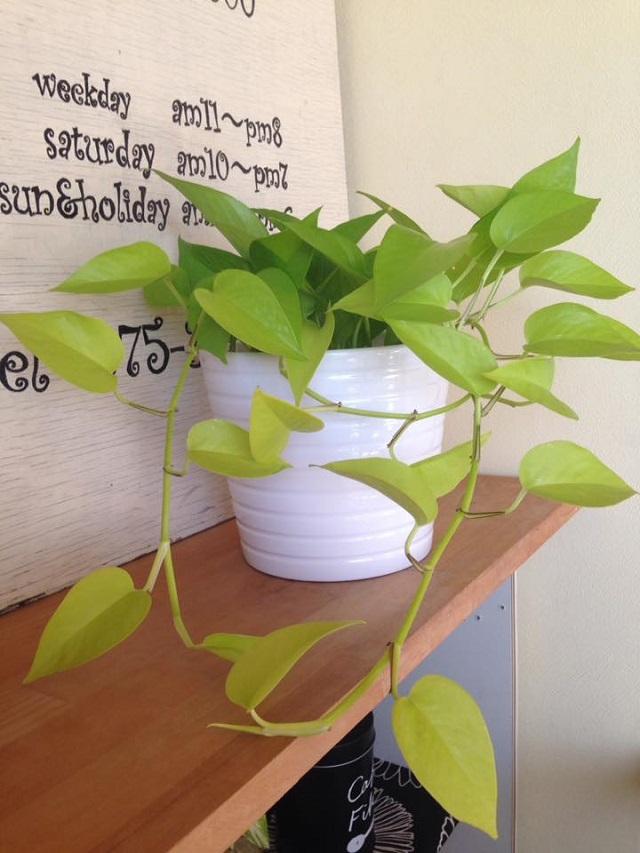 来年こそは観葉植物のある暮らしを送りたいあなたへ。植物を楽しむ3つのコツ