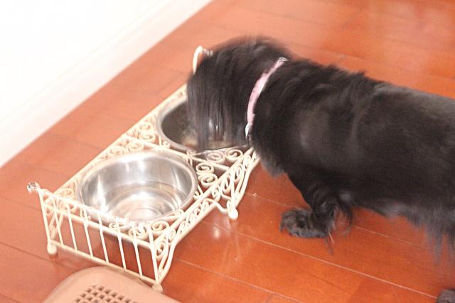 【犬と暮らす】家族でお世話ができてインテリアになじむ ペットグッズの収納法
