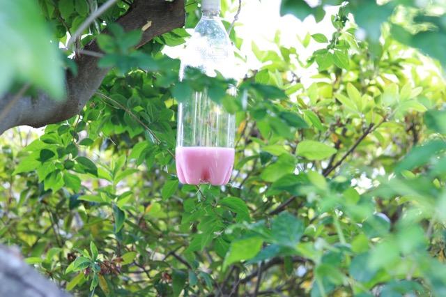 春先から初夏のスズメバチ対策に ペットボトルで簡単!「スズメバチトラップ」の作り方