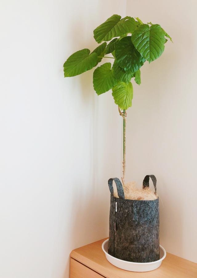 """""""重くない""""""""処分に困らない""""リサイクル素材のオシャレな布製植木鉢「ルーツポーチ」"""