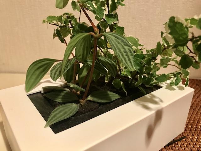 ズボラさんにおすすめ!「無印良品」の「壁にかけられる観葉植物」でグリーンのある暮らし