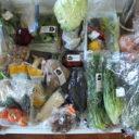 まとめ買いで冷蔵庫がパンパン!30分でできた野菜室のイライラを減らす収納アイデア
