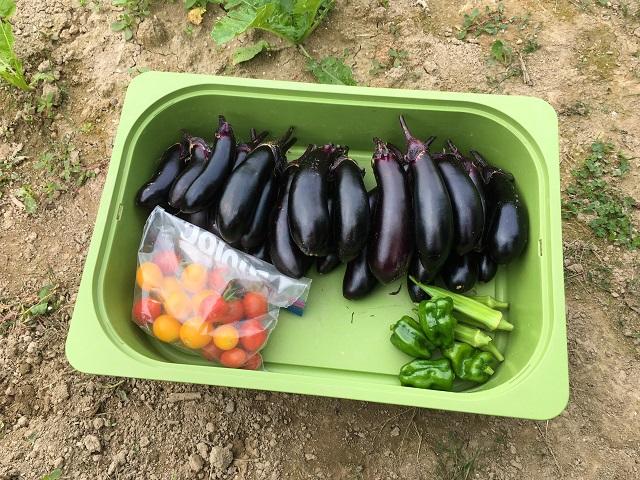 家庭菜園グッズはどこに置く? 余った収納用品で汚れを気にせずスッキリ収納!